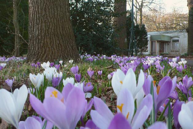 Februari 2008 - Nieuw leven op Beresteyn. Wat een welkom, om zo aan te komen!