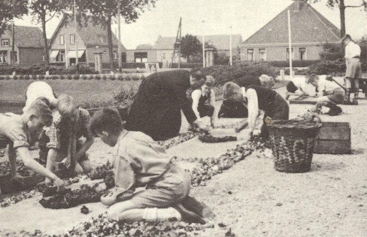 Bloemversiering maken voor Sacramentsdag, Willibrordusstichting Heiloo 1951. [Foto uit herdenkingsnummer van De Harpoen van juni 1965]